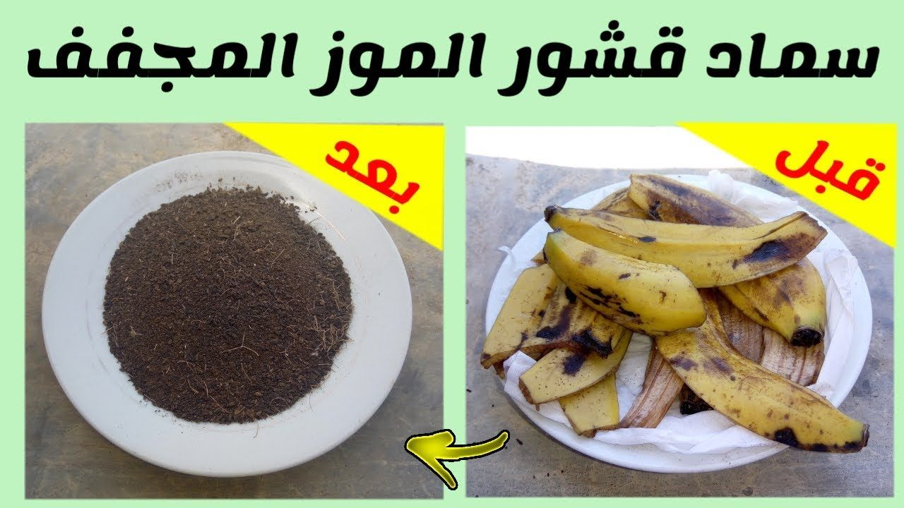 قشور الموز سماد قوي لتغذية و تسريع نمو النباتات المنزلية Https Youtu Be Wrmjwkhvs 8 Plant Nutrients Food Nutrient