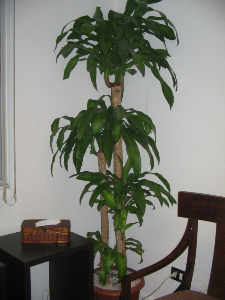 Plantas de interior plantas de interior plantas de for Plantas para interiores de casa