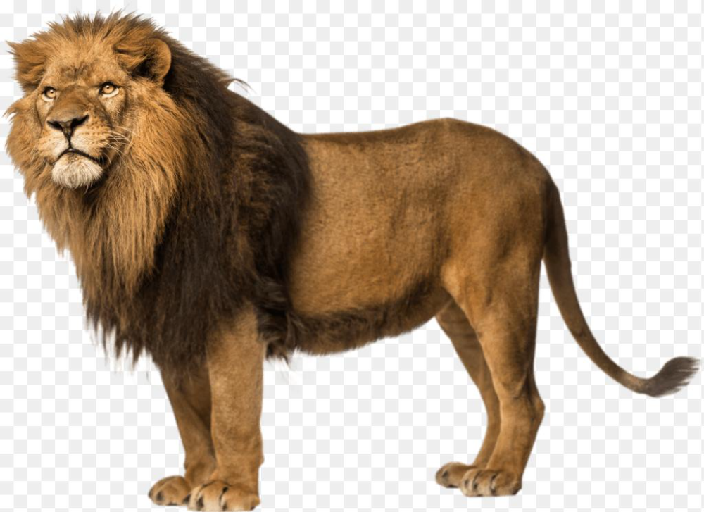 Lion King Balance Lion King Lion King Clipart Lion Logo Png And Vector With Transparent Background For Free Download Lion Illustration Colorful Lion Sacred Geometry Illustration