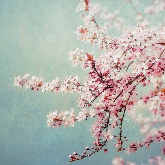 Cherry Blossom Print Cherry Blossom Tree Picture Cherry Etsy Pink Flowers Photography Pink Flowering Trees Blossom Trees