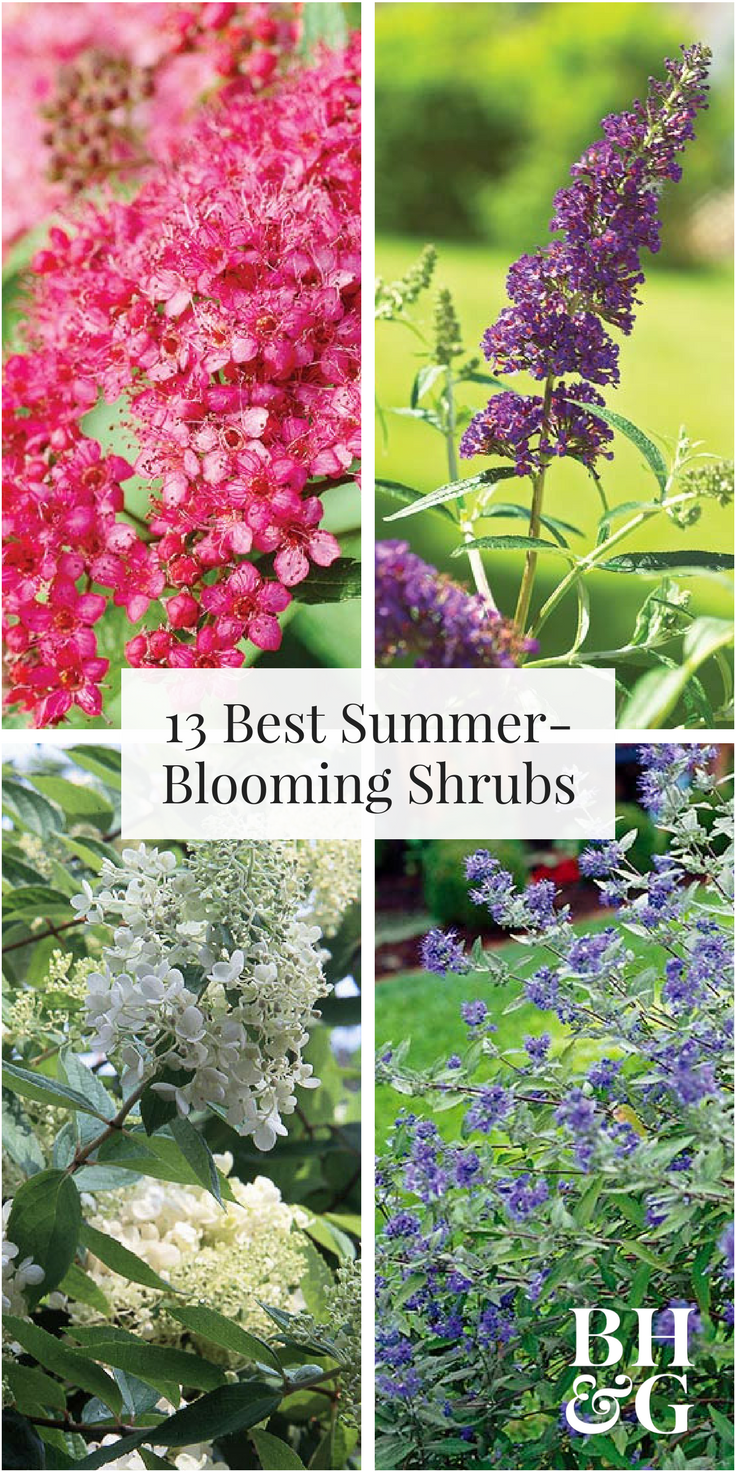 The best summerblooming shrubs shrub roses butterfly bush and