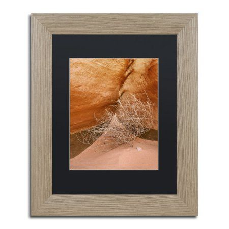 Trademark Fine Art 'Tumbleweed' Canvas Art by Michael Blanchette Photography, Black Matte, Birch Frame, Size: 11 x 14, Assorted