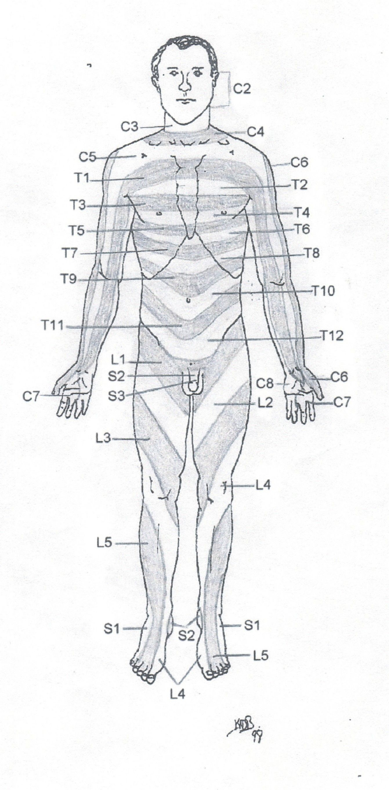 Frontal Dermatome Chart Copyright American Academy Of