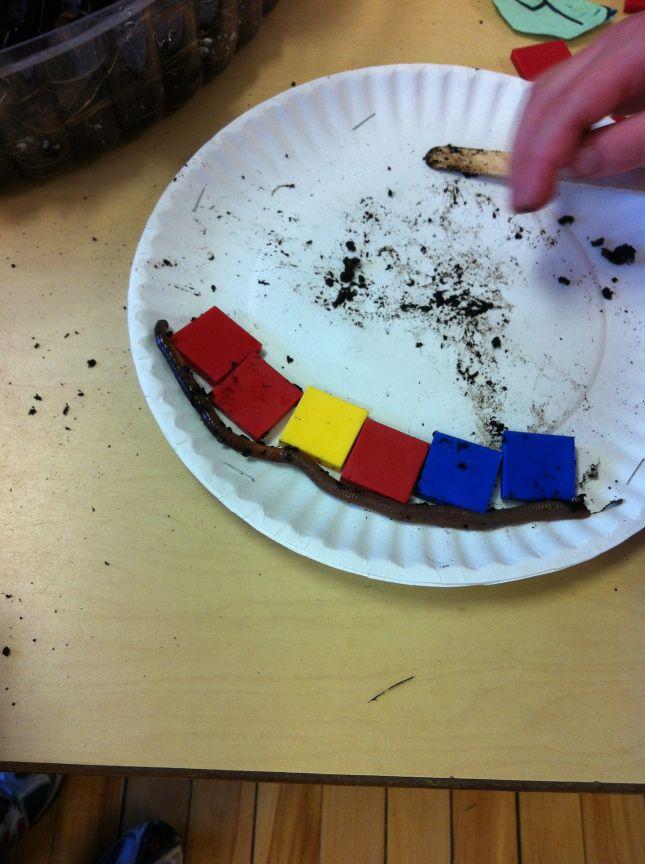 worm inquiry