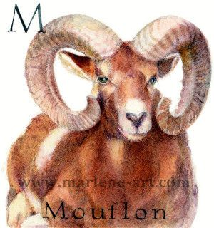 M - the 13th letter in the Animal Alphabet-is for Mouflon