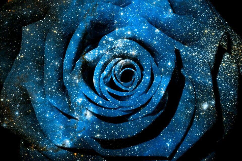 Galaxy Rose Art Wallpaper Hd Wallpaper Blue wallpaper galaxy rose