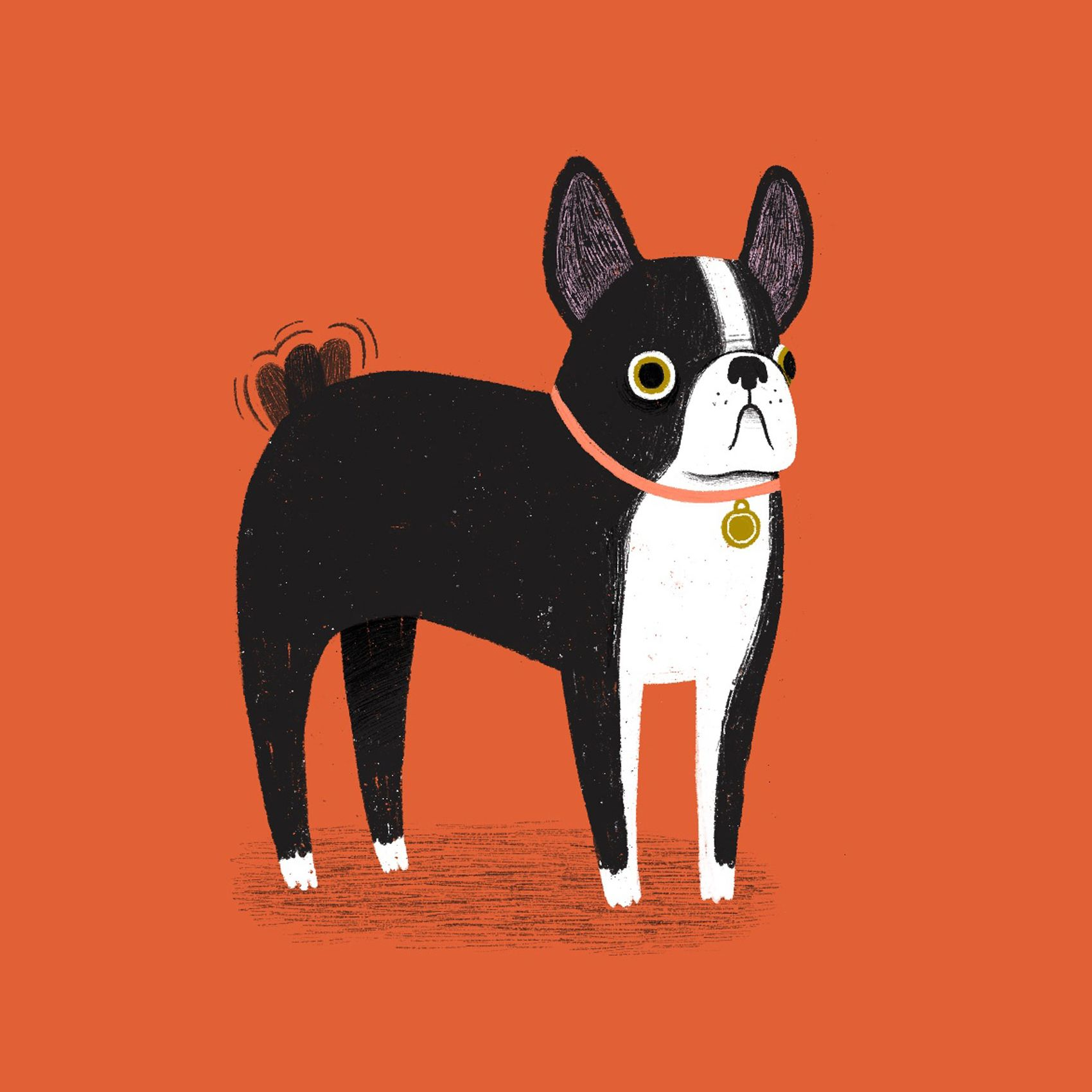 Boston Terrier Illustration In 2020 Boston Terrier Illustration Dog Illustration Boston Terrier Painting