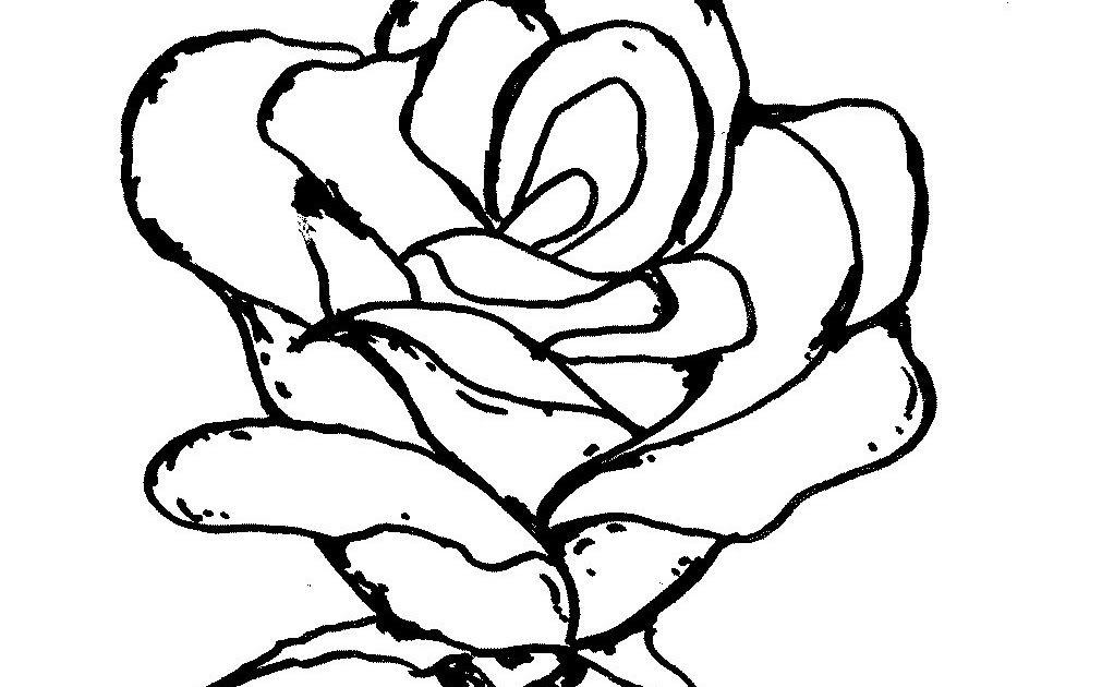 Wow 13 Lukisan Pensil Bunga Mawar Gambar Sketsa Bunga Mawar Merah Kata Kata Bijak Gambar Sketsa Bunga Mawar Harian Nusanta Di 2020 Bunga Bunga Teratai Lukisan Bunga