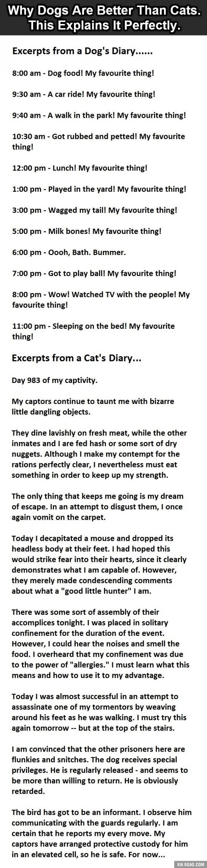 Why Dogs Are Better Than Cats. This Is So True. Cat