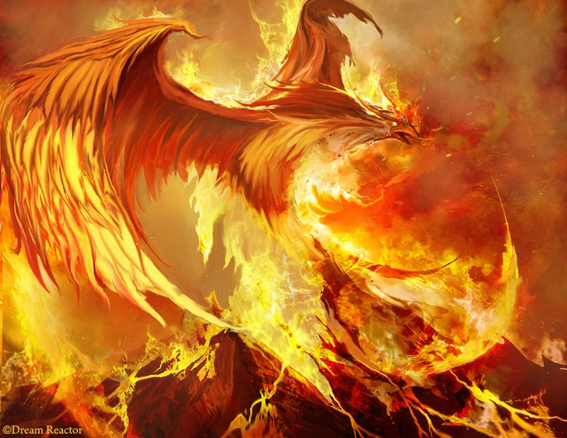 dragon free wallpaper download | the 3d dragon wallpapers for free ...