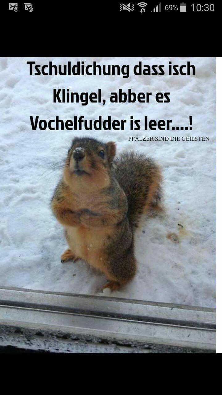 Photo of Vochelfudder ist Leder #animalcaptions Vochelfudder ist Leder