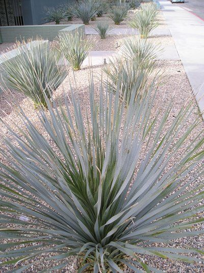 Desert Modern Landscaping Desert Landscape Ideas Modern