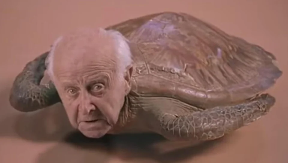 50 50 A Cymothoa Exigua Sfw A Turtle With A Human Head Sfw Fiftyfifty Turtle My Favorite Music Frontier Psychiatrist