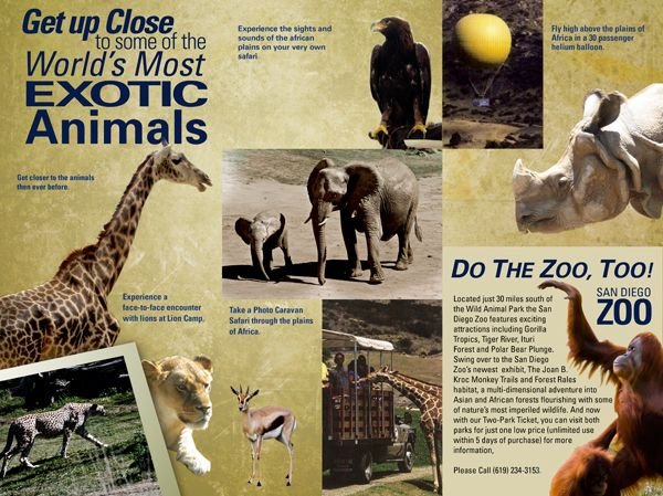 Brochure Design Zoo Google Search Art217 Brochure