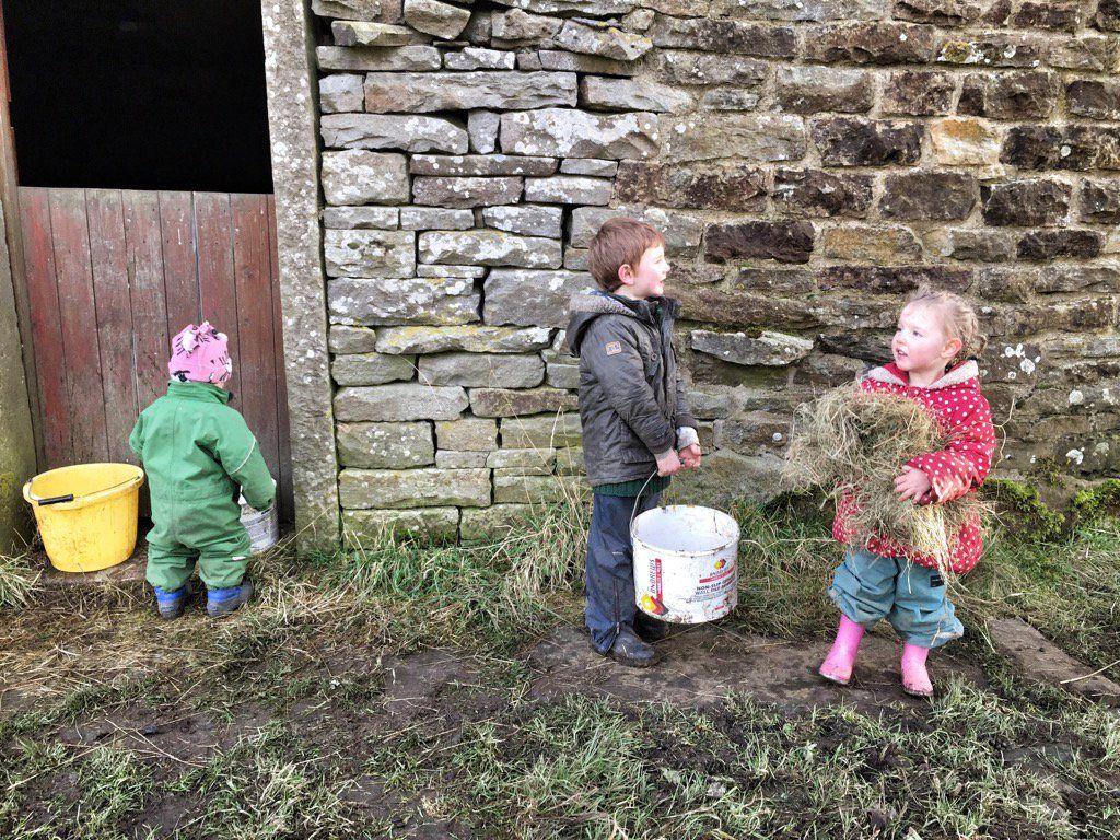 YorkshireShepherdess (@AmandaOwen8) | Twitter Busy around the farm yard!