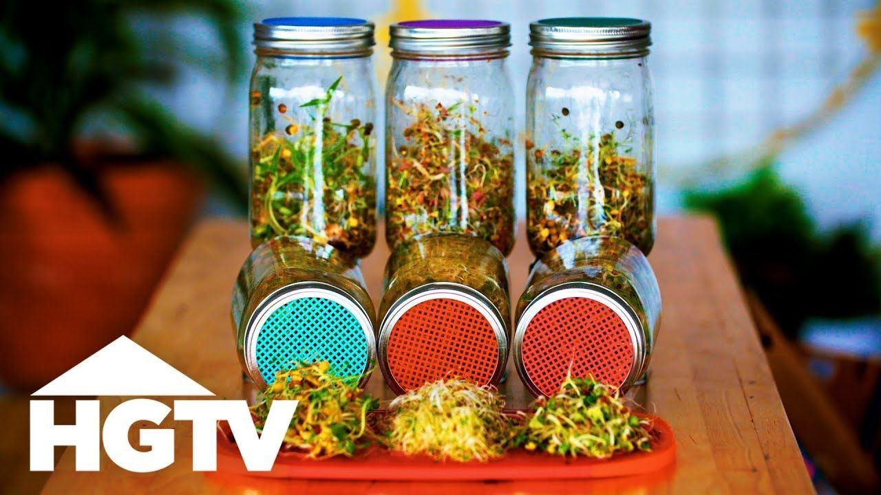 How to Grow Sprouts in Jars Way to Grow HGTV Growing