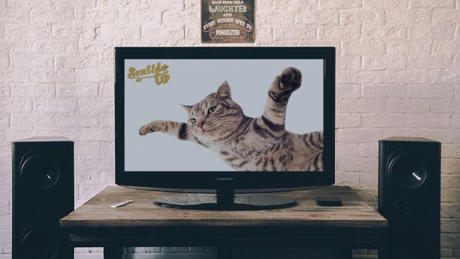 Comienza una nueva era en la televisión digital. Ahora con la televisión online podrás disfrutar de tus programas, series, concursos,...