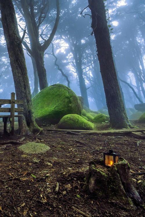 Forest Lantern - Sintra, Portugal