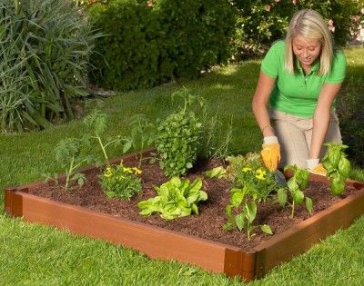 Your First Garden: 3 Crucial Questions