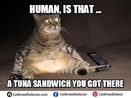 Funny Fat Cat Meme : Fat cat memes funny cute angry grumpy cats