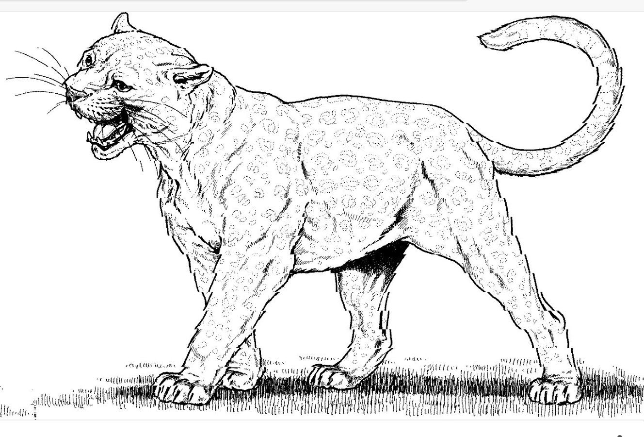 Pin De Jim Thurgood En Befor And After Coloring Pages Dibujos De Animales Dibujos Pumas