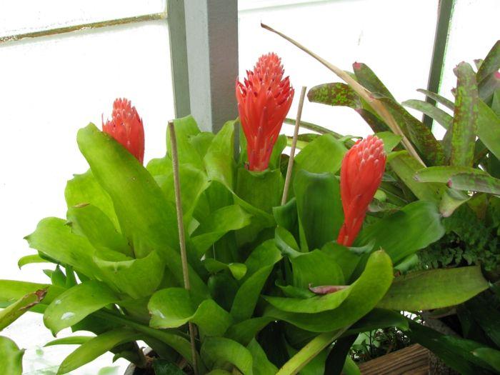 10 schattenpflanzen f r die dunkelsten ecken zu hause zimmerpflanzen pinterest. Black Bedroom Furniture Sets. Home Design Ideas