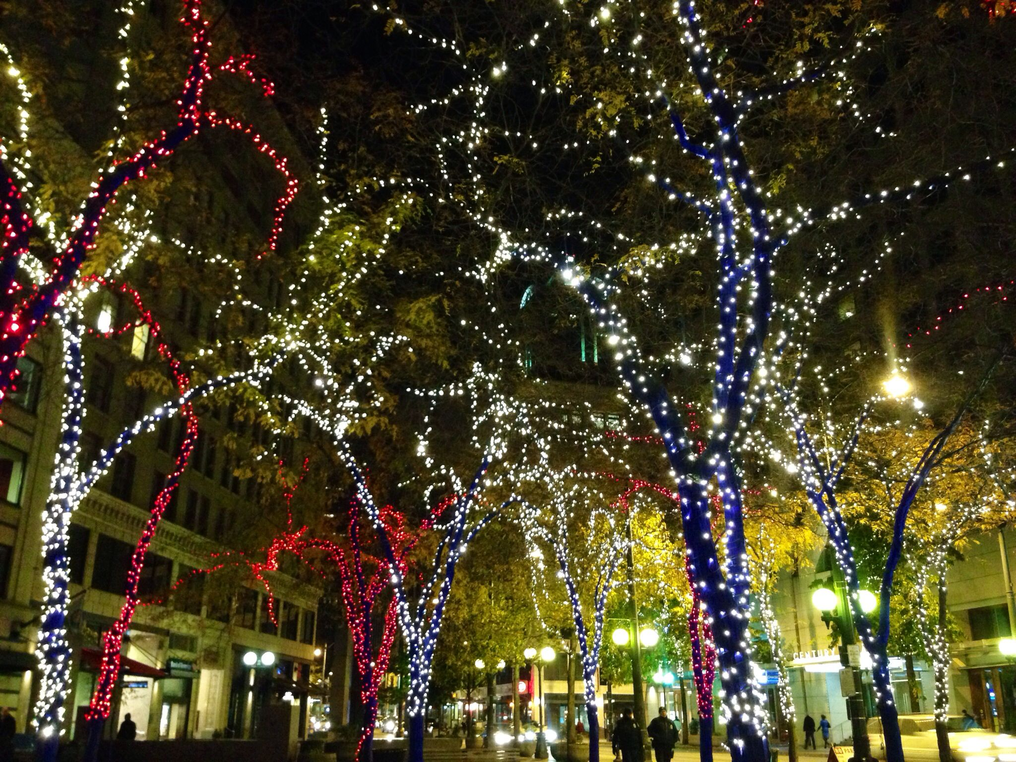 Christmas Lights In Seattle!!! #OurCity
