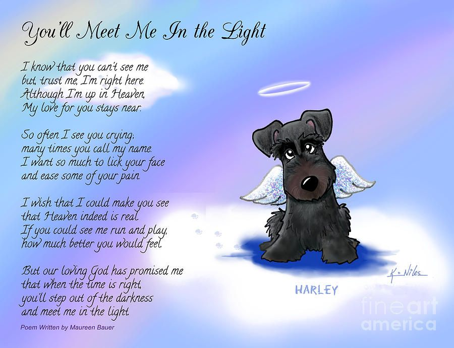 Schnauzer Angel Art Picture Dog Memorial Pet Loss Gift Rainbow Bridge