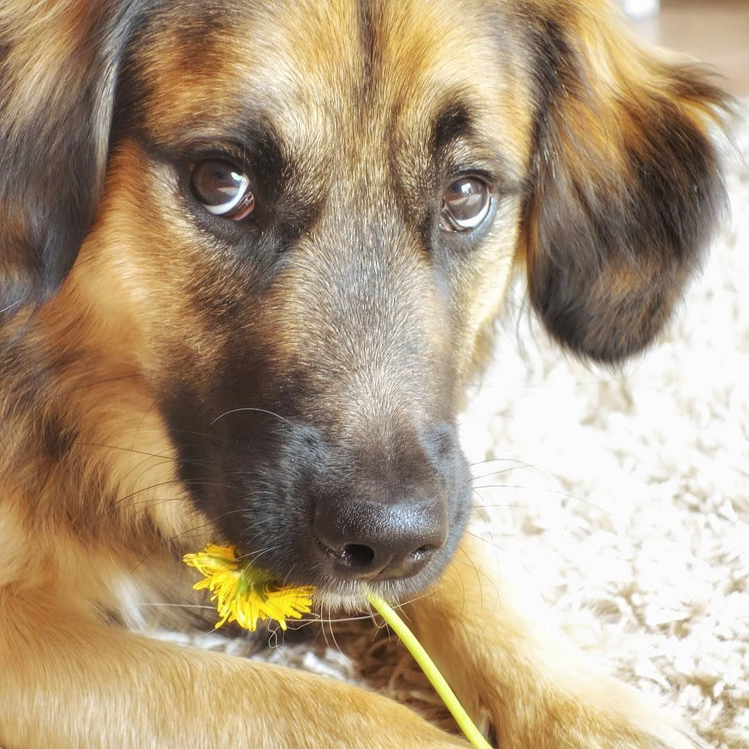 87 likes 13 comments sunny the dog happy_dog_sunny