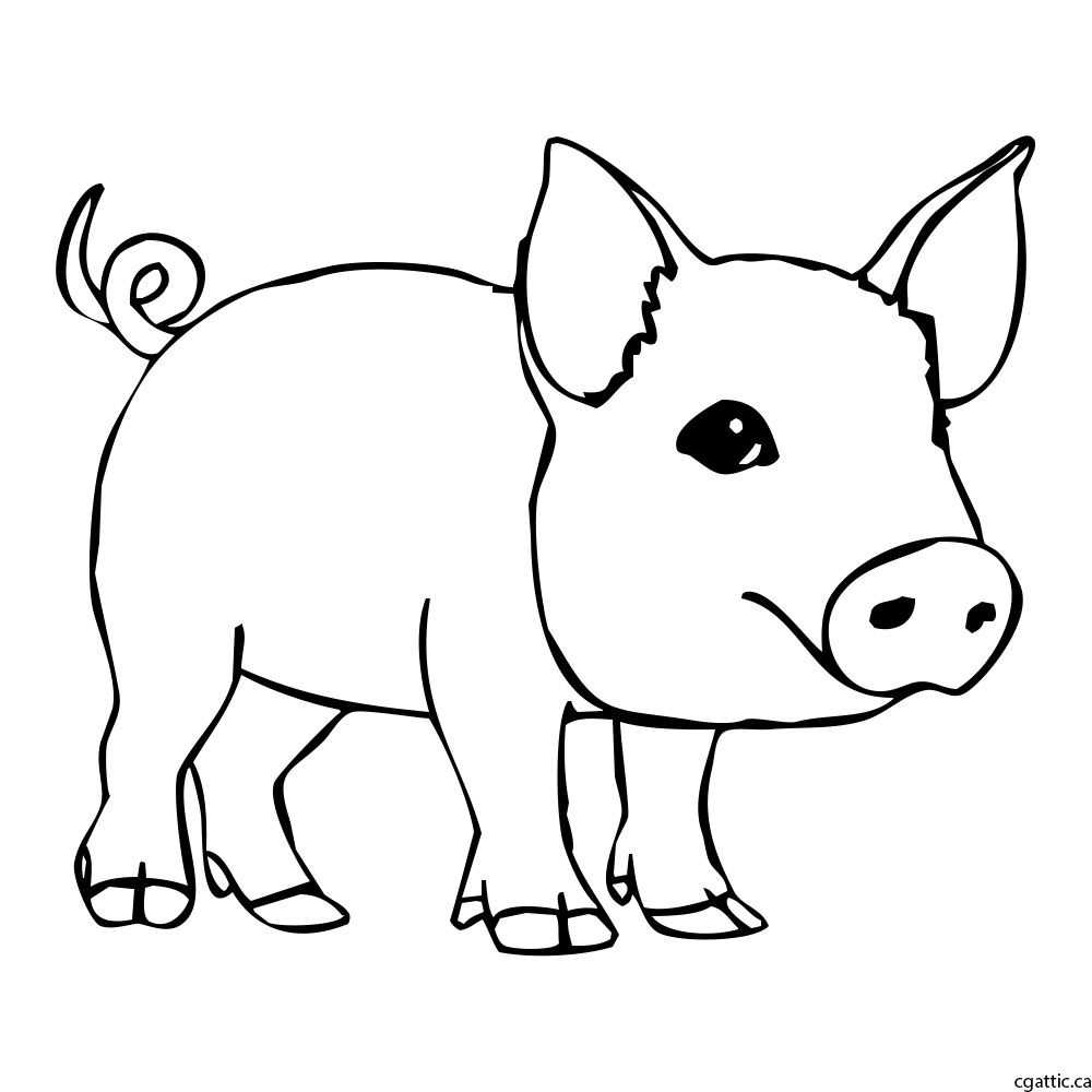 Pig cartoon drawing step 2 clean up the the messy sketch to refine it into a workable line drawing