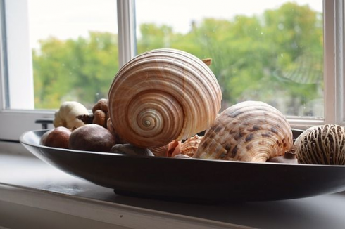 shell windowsill sea witch altar tools Seashells In Witchcraft wicca witch witchy magick manifestation occult ritual rootwork hoodoo conjure spells spellwork meditation #altardecor #witch #altar #decor