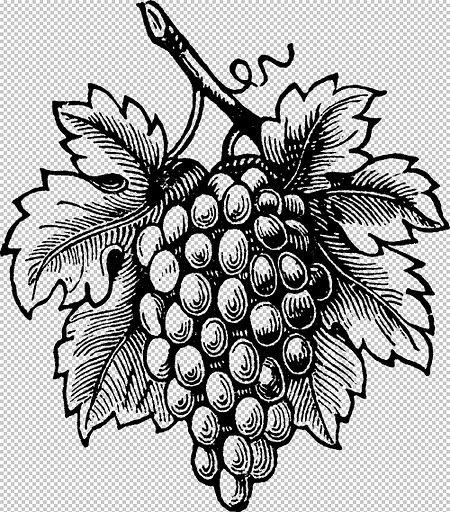 Картинки фрукты для выжигания по дереву букеты