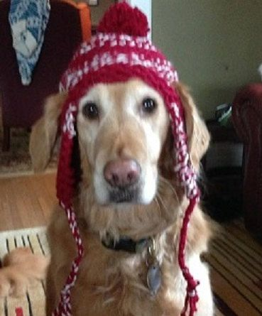 Dog Hat Knitting Pattern Free Image Collections Handicraft Ideas