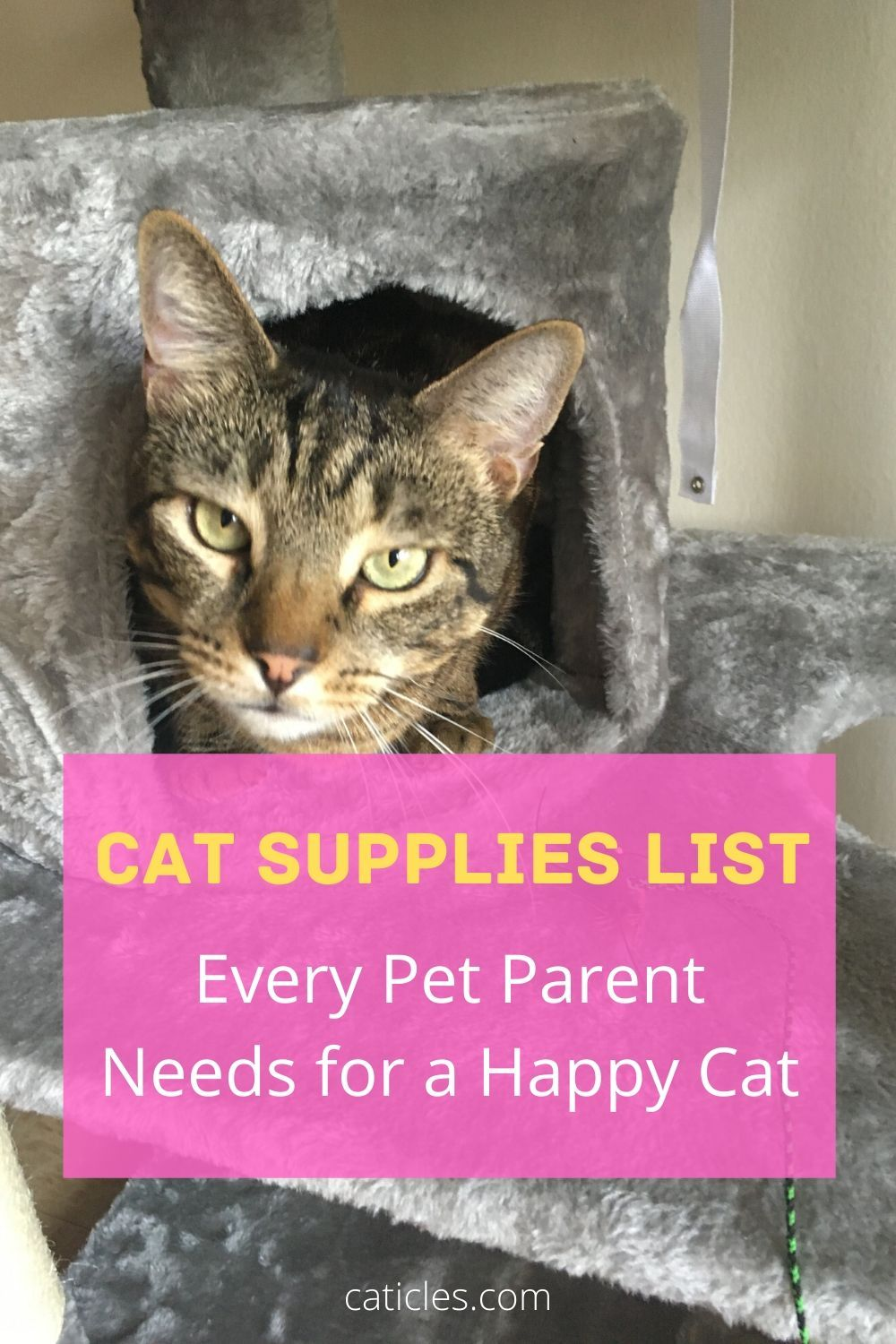 Cat Supplies A Complete List of Everything You Need Cat