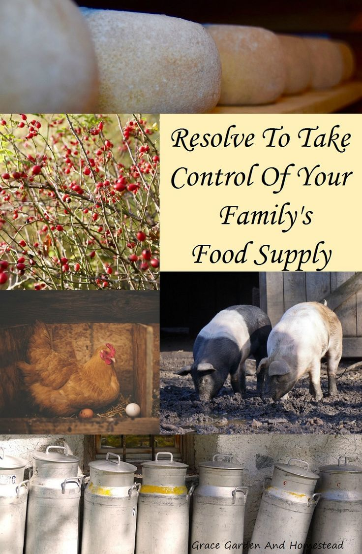 Resolve To Take Control Of Your Family S Food Supply Grow Your