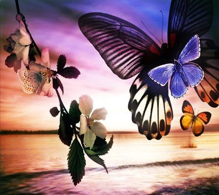 Butterflys Nature