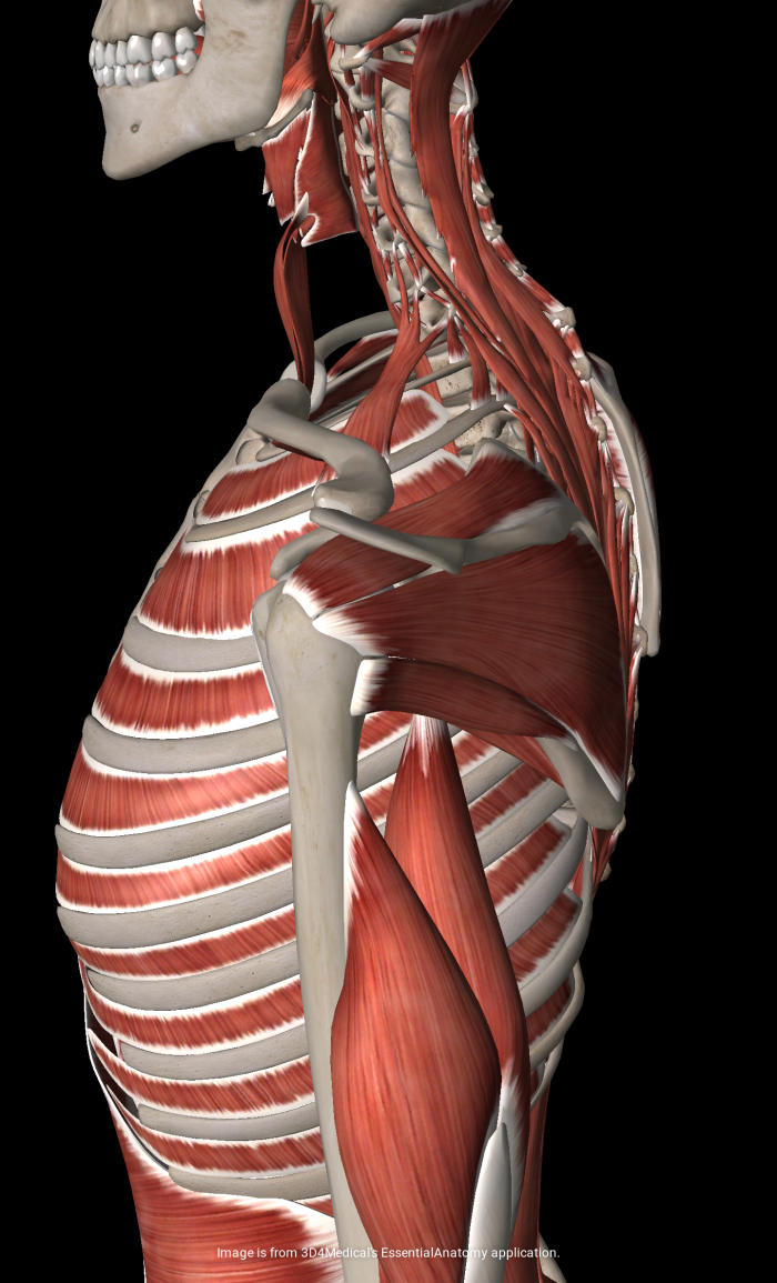 """The Rotator Cuff Screams, """"Don\'t Do This Exercise!"""" – Simply Senior ..."""