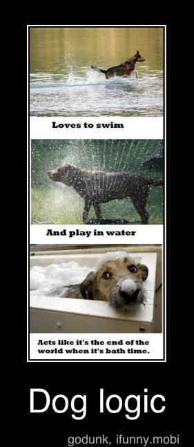 Dog Hose Meme : Obligatory, Animal-related, Pinboard., Ideas, Pets,
