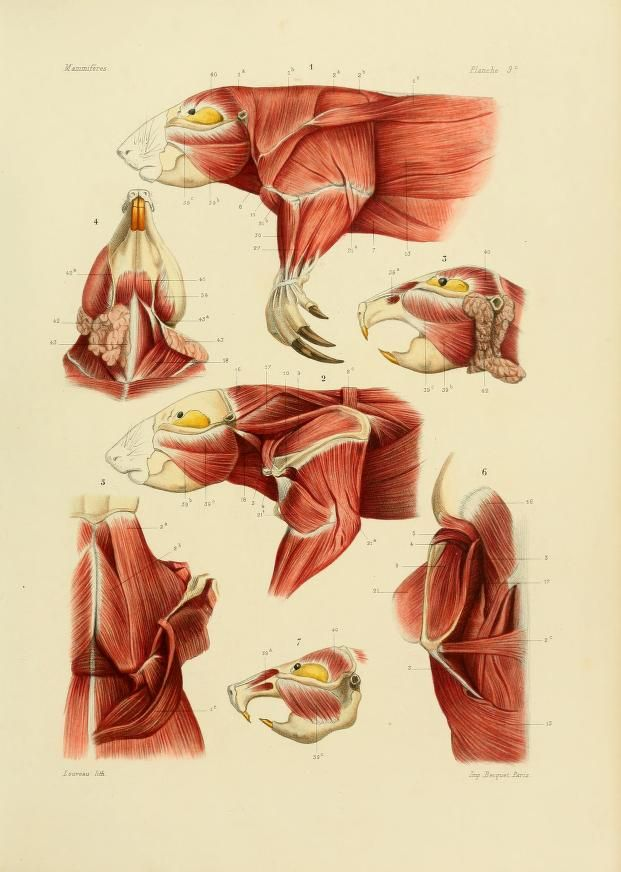 Único Rata Intestino Anatomía Componente - Anatomía de Las ...