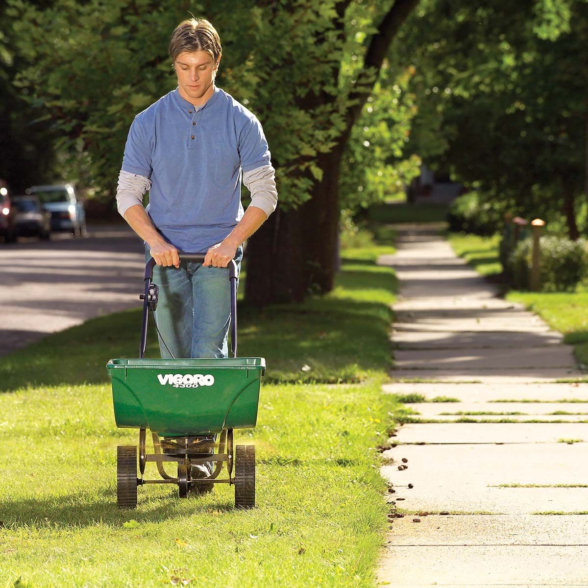How to get rid of crabgrass crab grass lawn care tips