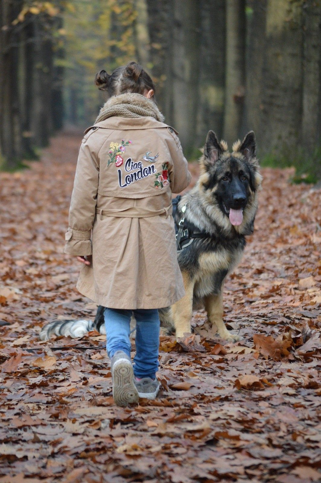 Gsd Dusty German Shepherd Dogs Shepherd Dog Winter Jackets