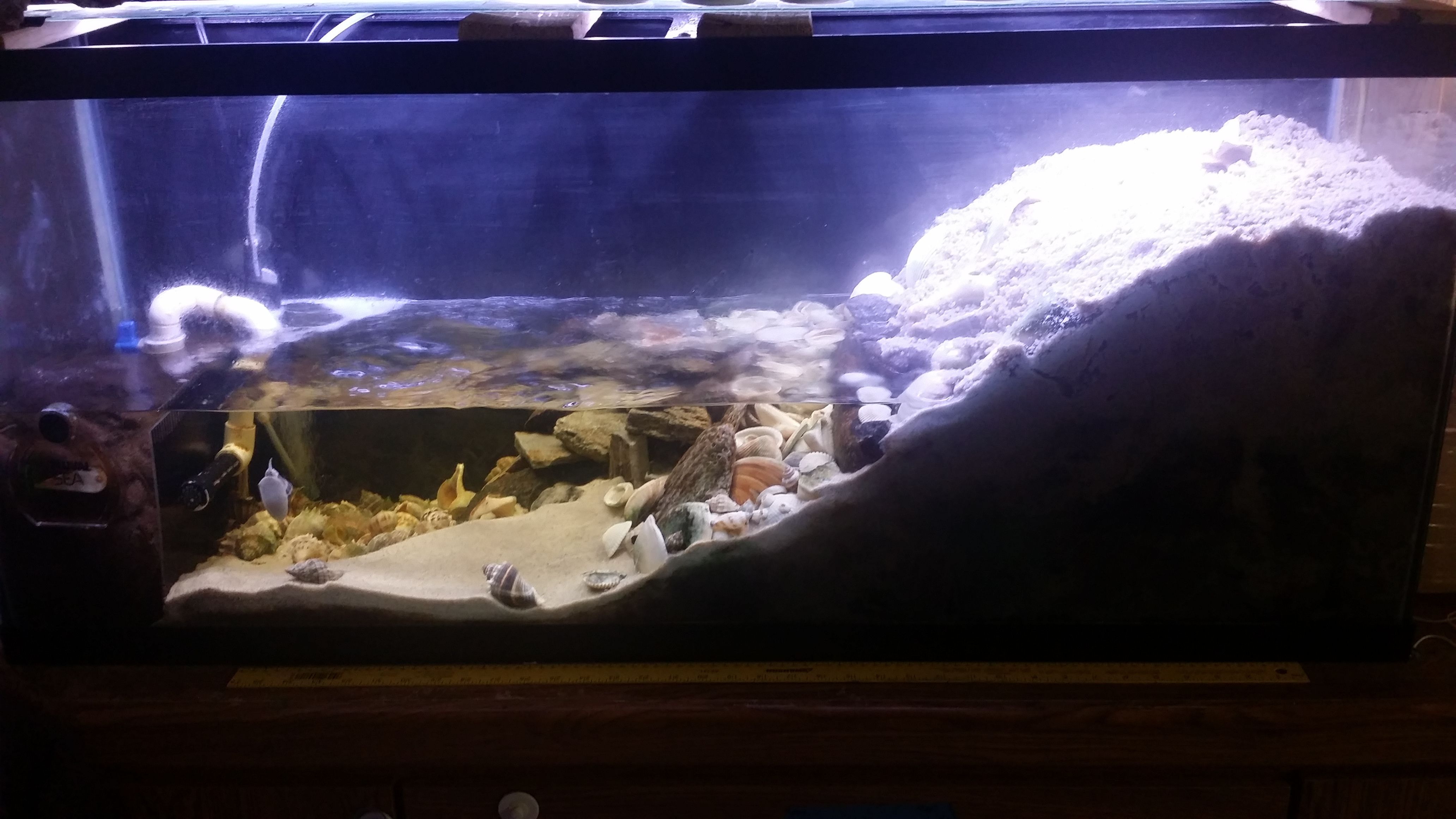 Amazing mangrove tank This will definitely be my next 10 gallon