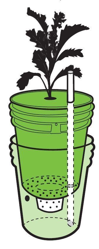 Build A Self Watering Container Do It Yourself Organic