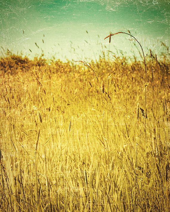 nature photography grass photograph field mint wall by FineArtLab