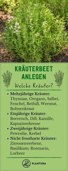 Kräuterbeet anlegen: Standort, Sortenwahl & Anleitung – Plantura