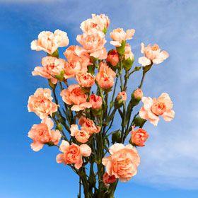 Bright Orange Spray Carnation Cheap Flowers Online Cheap Flowers Online Carnations Mini Carnations