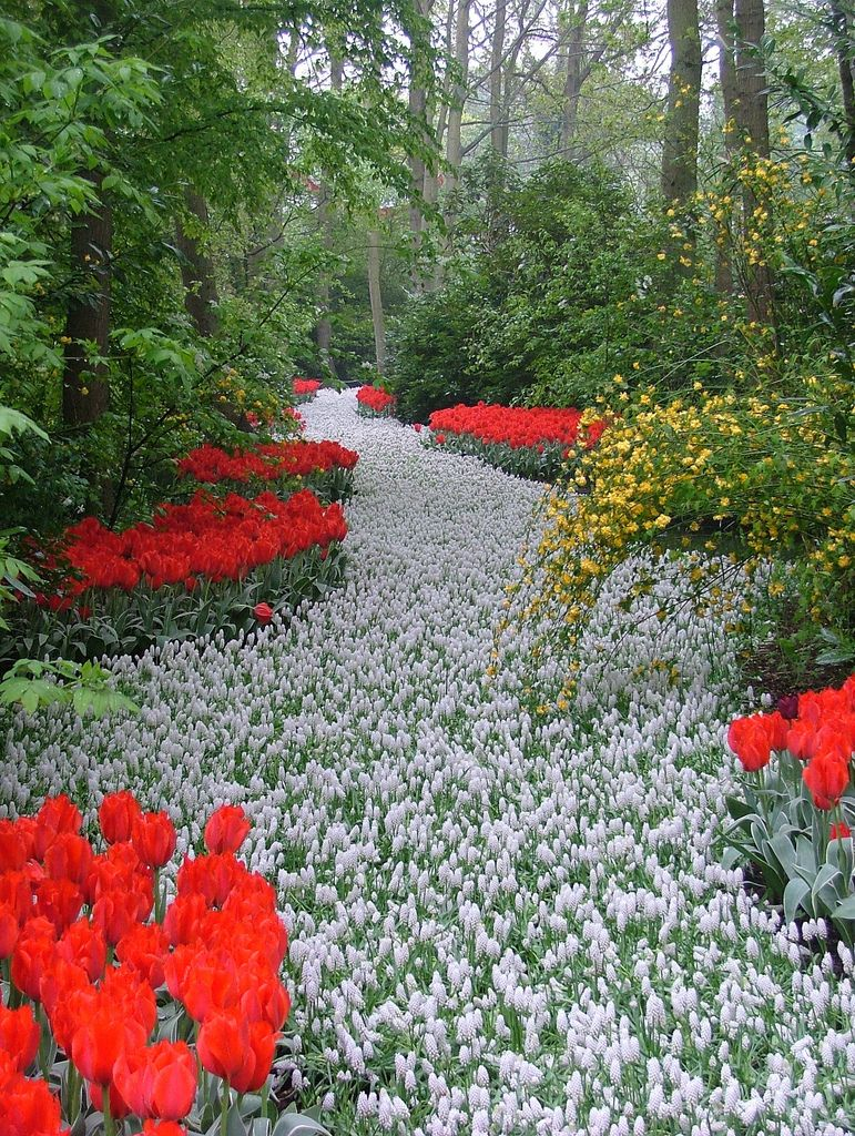 Flower Garden Path keukenhof gardens | down the garden path | pinterest | paths