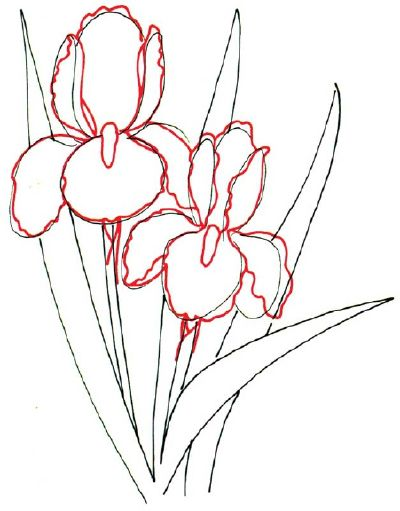 How To Draw A Bearded Iris Line Drawing Iris Drawing Flower Drawing Plant Drawing