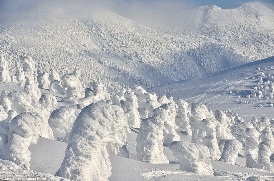 Sho Shibata Captures The Snow Monsters Of Northern Japan Snow Monster Japanese Mountains Winter Photos