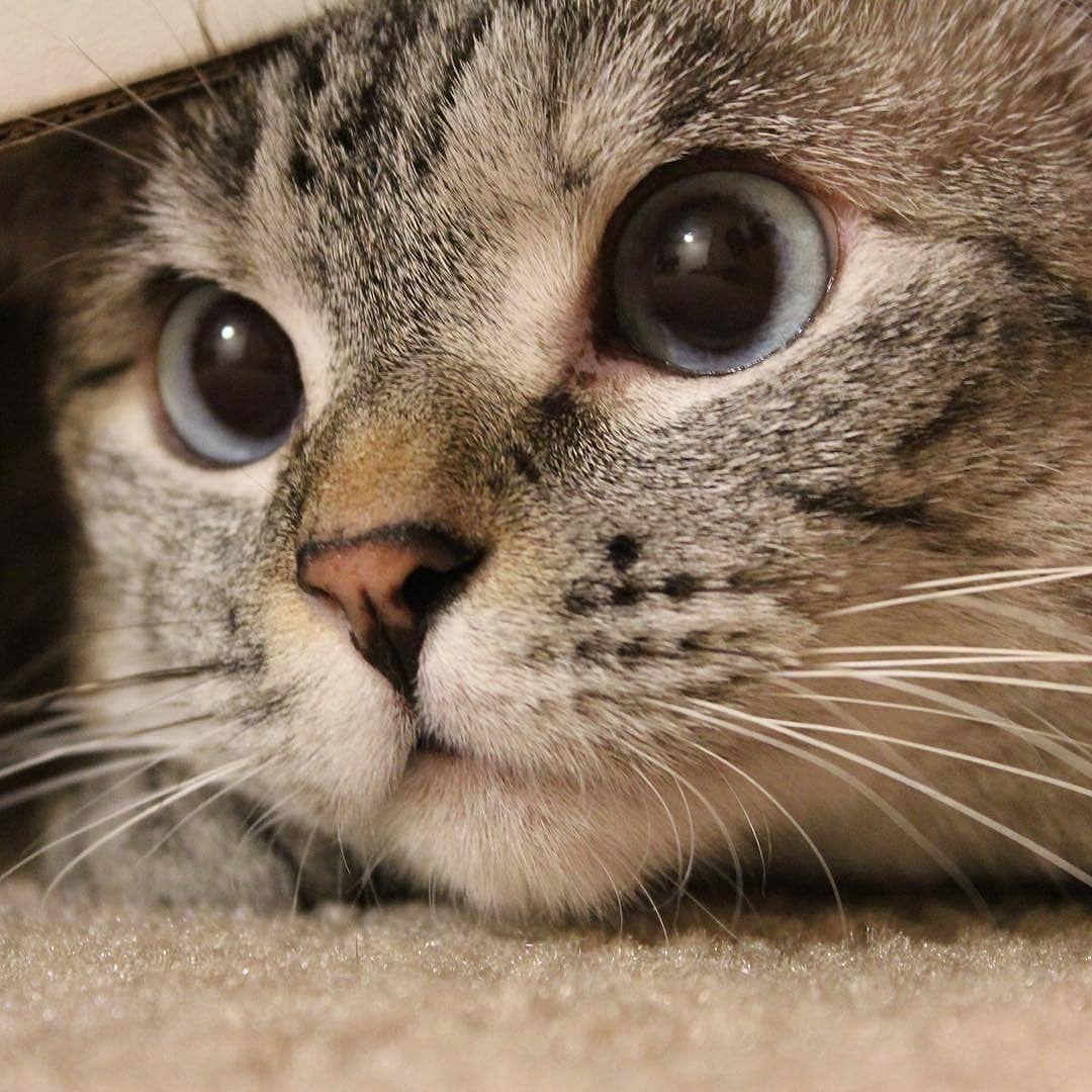 """Malaikat Kucing di Instagram """"Zoom muka mpus yang super"""